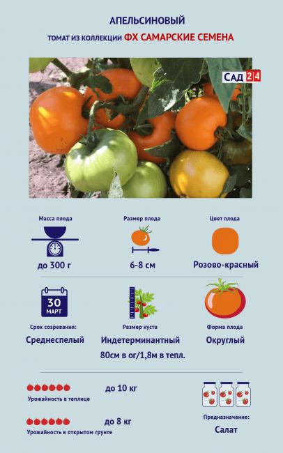 Томат «Апельсиновый»