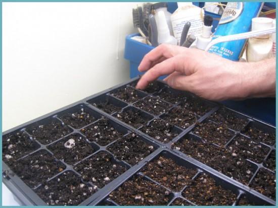 Правила посадки семян перца