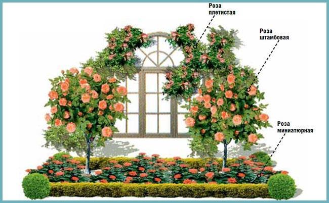 План-схема розария