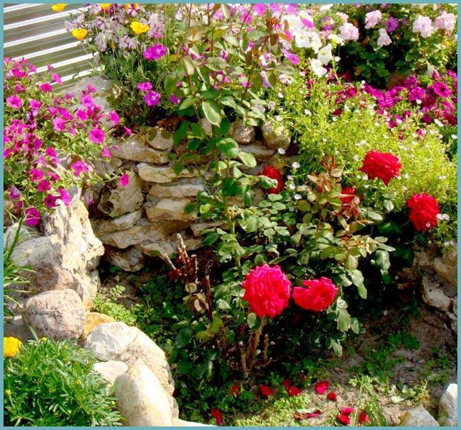 оформление розария на даче