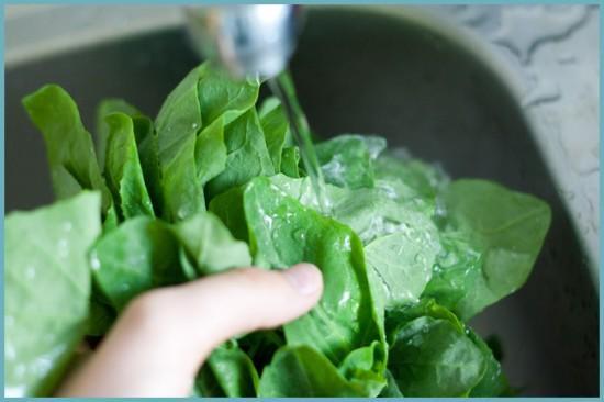 как законсервировать шпинат