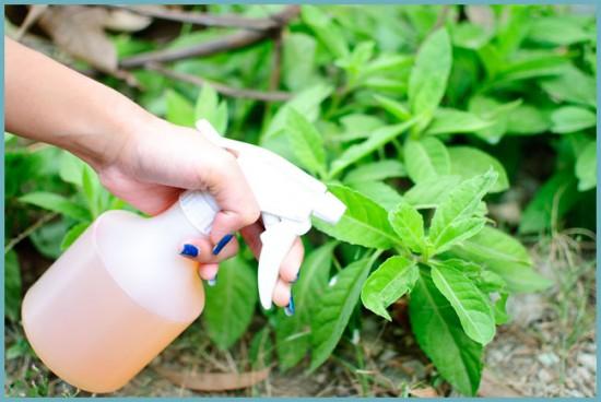 как подкормить растения
