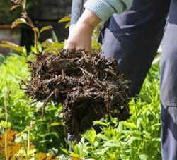Виды органического удобрения