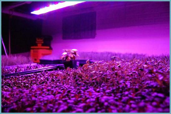 Светильник для растений своими руками