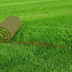 Рулонный газон для дачи