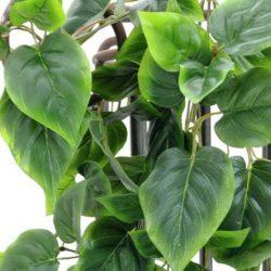 Комнатные вьющиеся растения