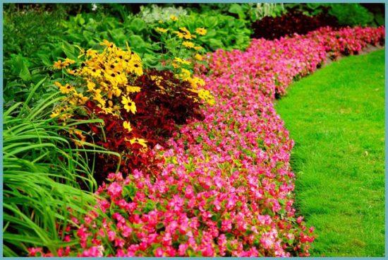 как выбрать растения для бордюра