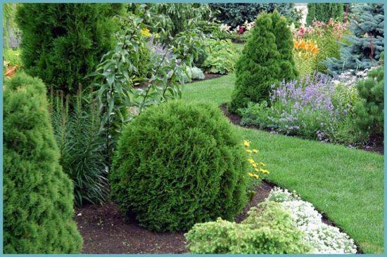 Кипарисовик в саду