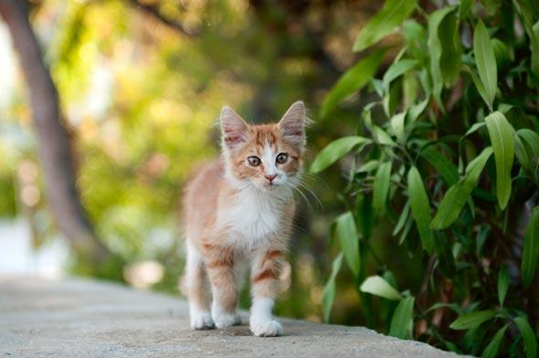 Как отпугнуть кота
