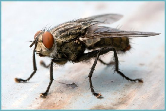 почему нужно избавиться от мух