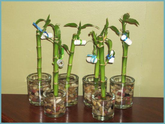 как посадить бамбук