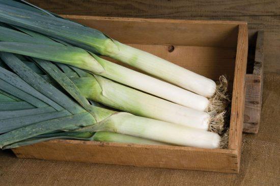 лук-порей карантанский выращивание из семян